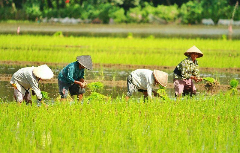 BUMN Klaster Pangan Luncurkan Learning and Research Institute