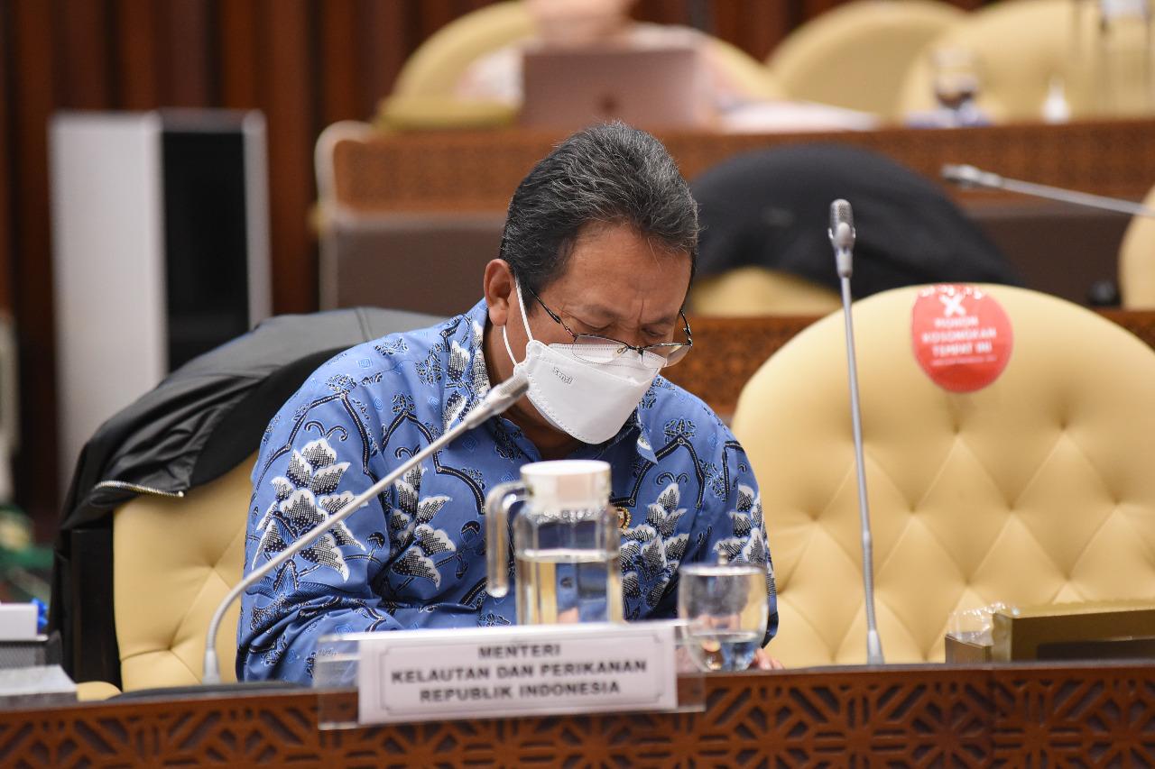 KKP Akan Rehabilitasi 2.400 Hektare Hutan Mangrove Sepanjang 2021