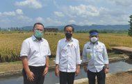 Padi IPB 3S, Dipuji Jokowi Hasilkan 11 Ton Per Hektar