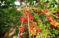 Mahasiswa IPB Gelar Edu Green Village, Upaya Lestarikan Lingkungan