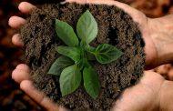 Indonesia Dukung Pelestarian Lingkungan dan Pembangunan Berkelanjutan