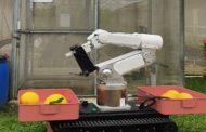 Melon Harvesting Robot, Robot Pemanen Melon Inovasi Terbaru IPB