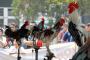 Menengok Kontes Ayam Ketawa Nasional di FKH IPB University